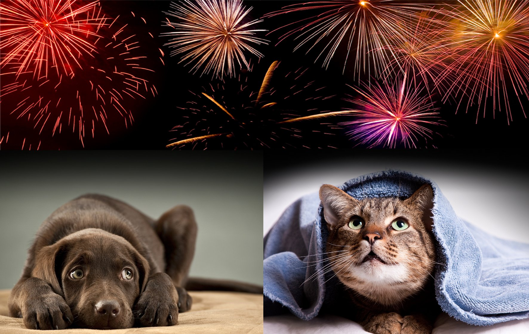 Cats Dogs and Fireworks